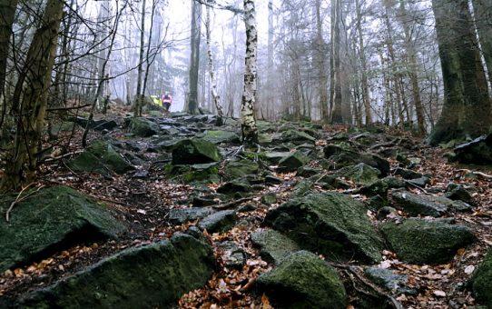 Kamienna Ślęża – półmaraton na koniec sezonu